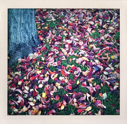 Sunday leaves
