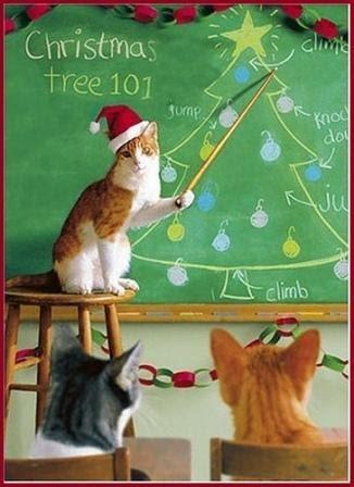 Αστειες χριστουγεννιάτικες γάτες