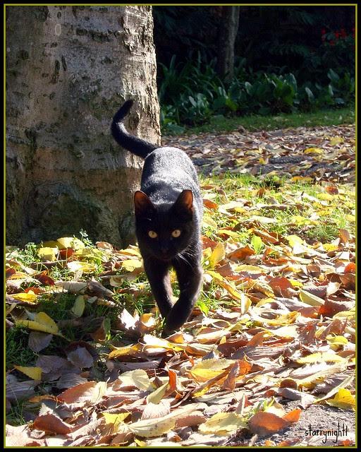 Autumn cat - Gato de Outono