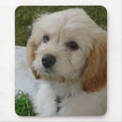 Puppy Love - Cute MaltiPoo Dog Photo Mousepads
