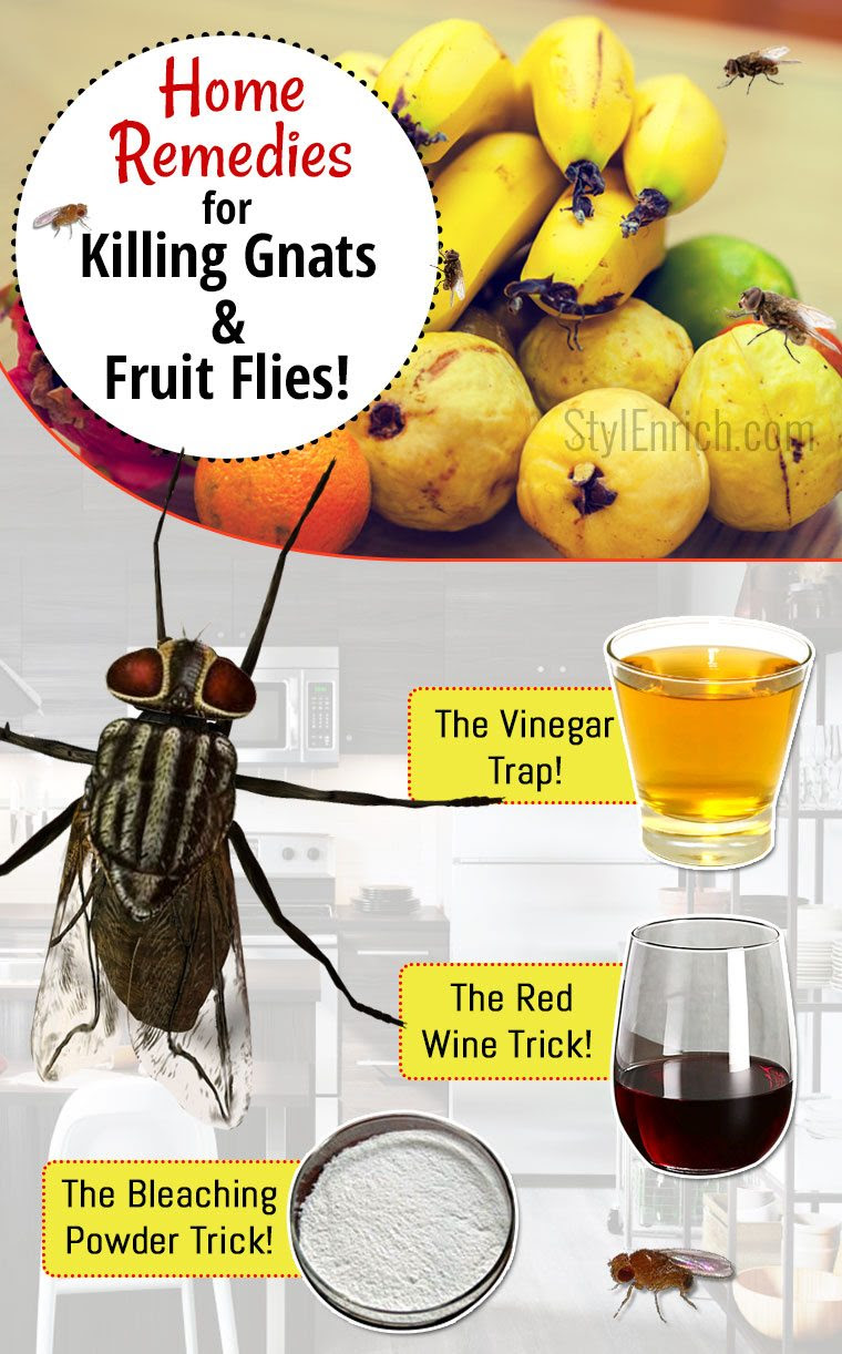 How to Get Rid of Gnats and Fruit Flies?