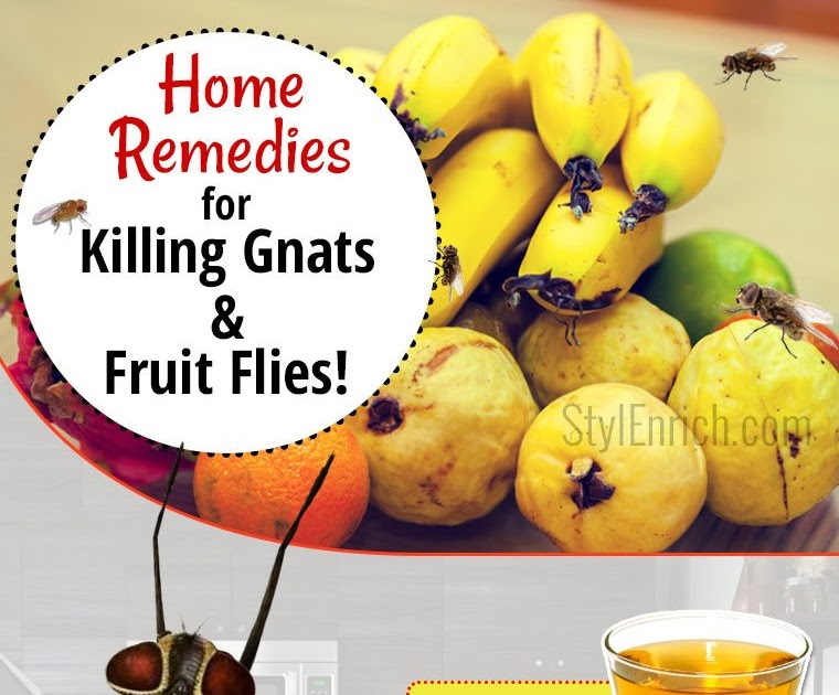 Welcome To Gabriel Atanbiyi Blog Home Remedies For Killing Gnats