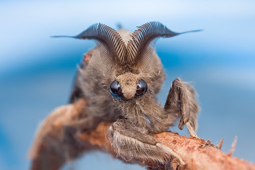 A beautiful moth...IMG_9811 copy