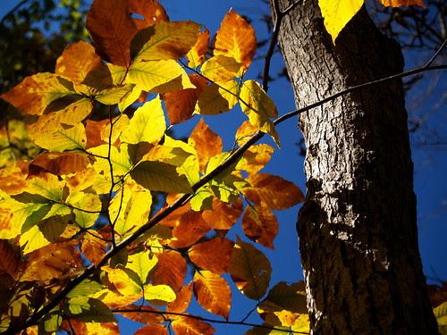 Fall at Hawksbill Crag