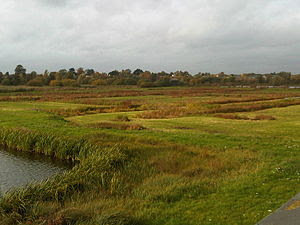 English: Landscape from WWT London Wetland Cen...