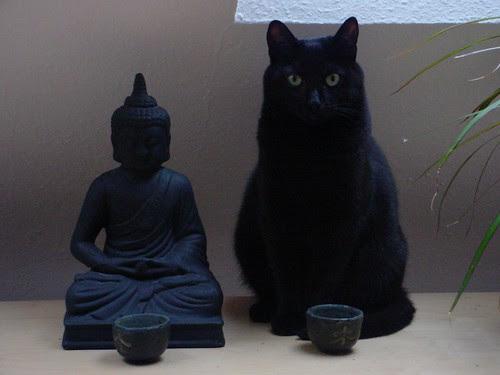 Buddhacat
