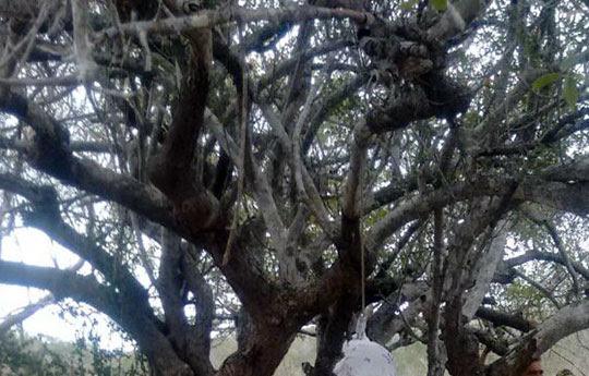Corpo foi encontrado pendurado em uma árvore próximo ao local onde mulher foi morta a pauladas na noite anterior