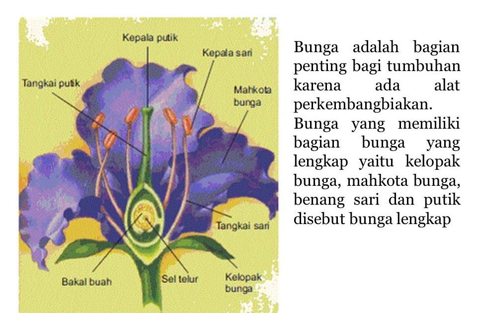 Bunga Lengkap Mempunyai Bagian Bagian Yaitu Berbagai Bagian Penting