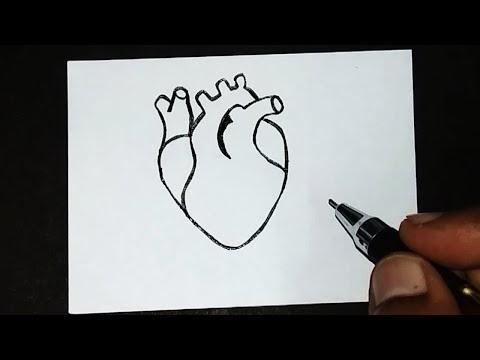 Gercek Insan Kalbi Organ Kalp Cizimi Karakalem Kolay Cizim