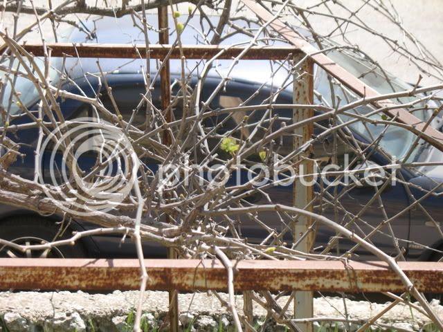Spring in Shiloh 4