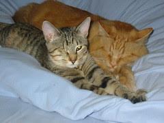 Maggie loves her big orange brother