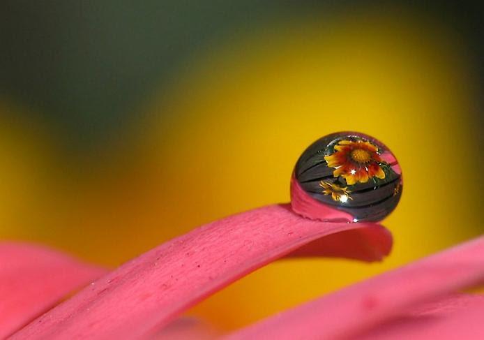 Цветок отражается в капле воды. Фото
