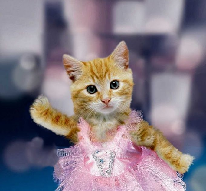Gambar Kucing Pinterest godean.web.id