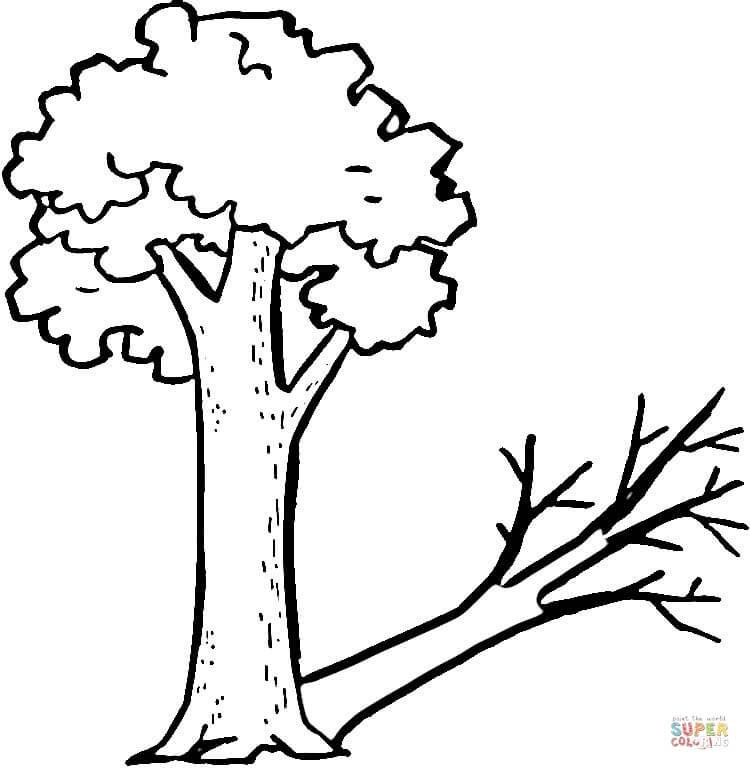 Dibujo De Un árbol Y Su Extraña Sombra Para Colorear Dibujos Para