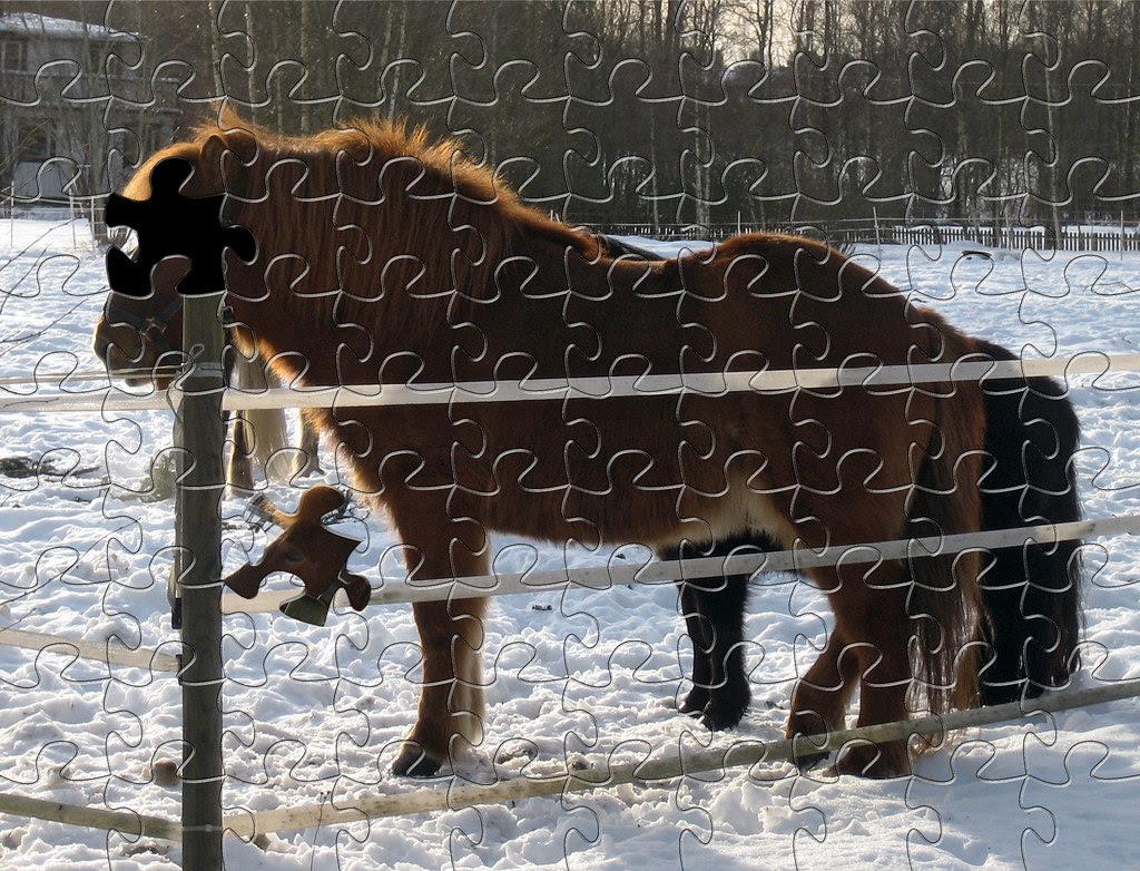 Puzzled Horse