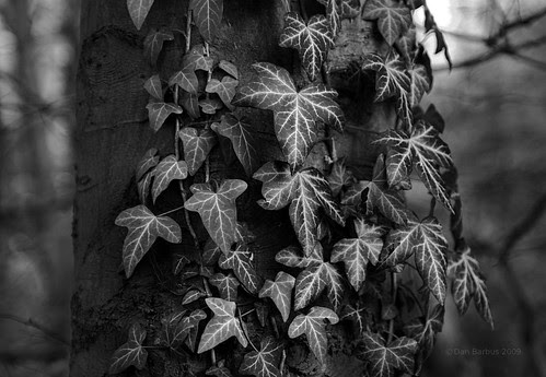 the beauty of leaves