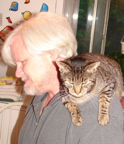 Shoulder cat