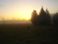 Dawn mist over the hayfield