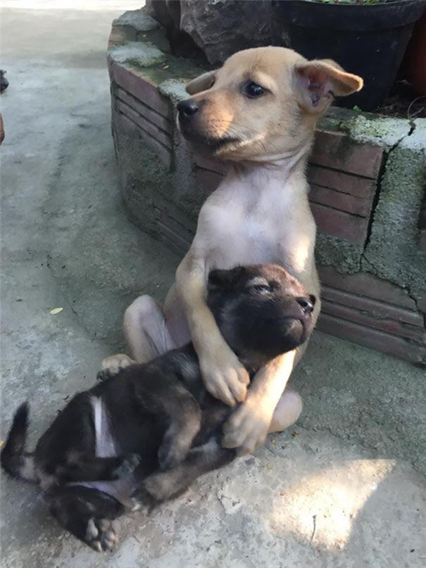 cachorrinhos-abandonados-na-param-de-se-abracar-desde-que-foram-resgatados-3