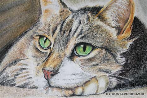 prismacolor cat colored pencils  guzumak  deviantart