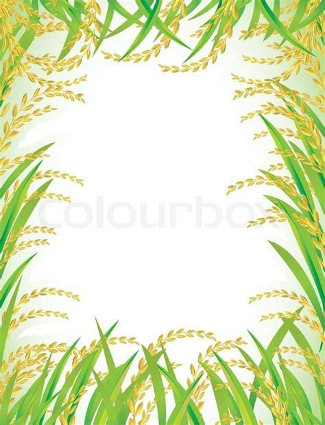 Frame and background of Thai white rice.   Vector   Colourbox