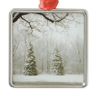 Christmas Trees Christmas Ornament