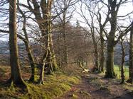 Beech avenue up Gallow Hill