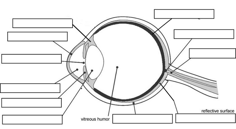 11 Best Images of Parts Of The Eye Worksheet For Kids ...