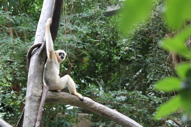 Zoo fun 099