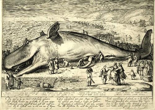Beached Whale - Jacob Matham 1602