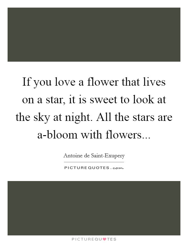 Night Sky Quotes Night Sky Sayings Night Sky Picture Quotes