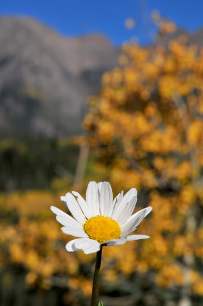 Final Breath of Summer on Molas Pass