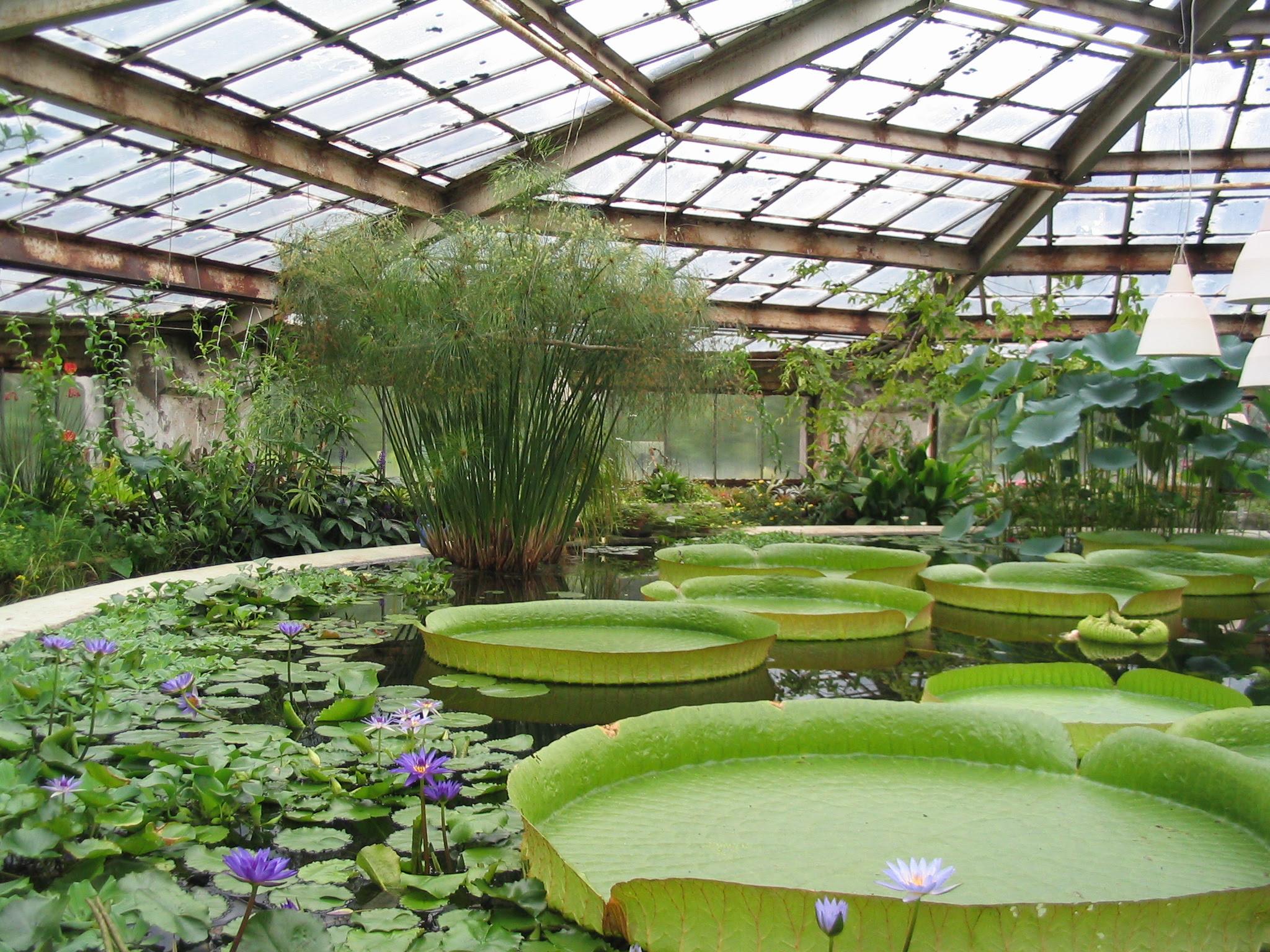 Botanical_Garden_V
