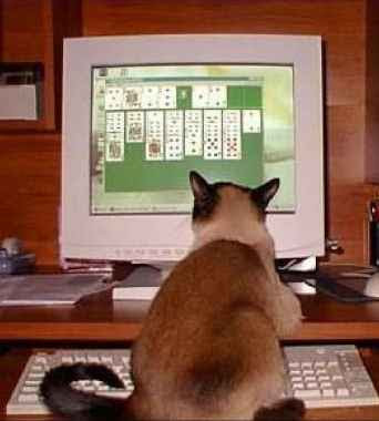 Solitaire for Cats