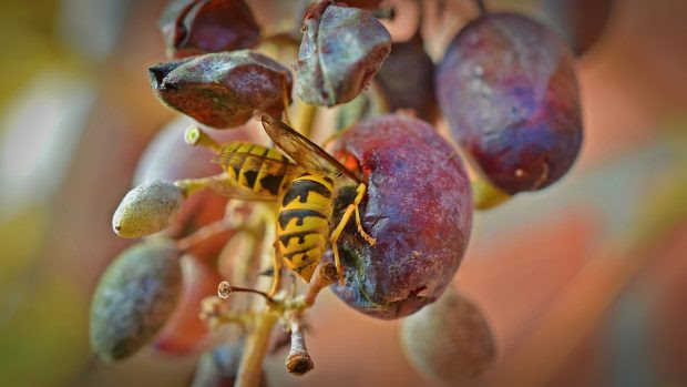 Four Ways to Get Rid of Hornets and Wasps