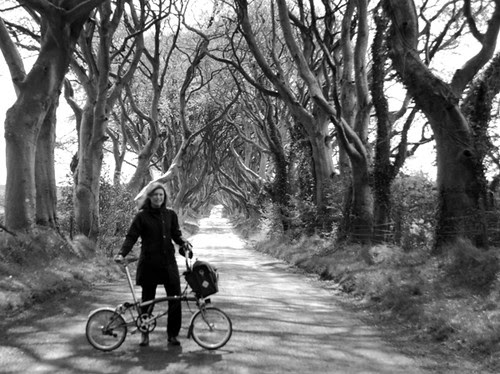 At the Dark Hedges, After Storm