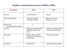 Diferencia Entre Una Molecula De Adn Y Arn Esta Diferencia