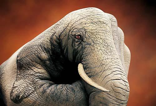 Elefante - Campagna Europea Schroeders - 2002 (Guido Daniele)