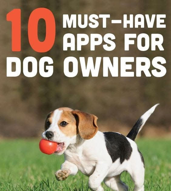 kartgram these apps will help you raise your furry