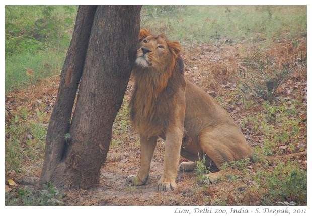 best of nature and wildlife pictures - S. Deepak, 2011