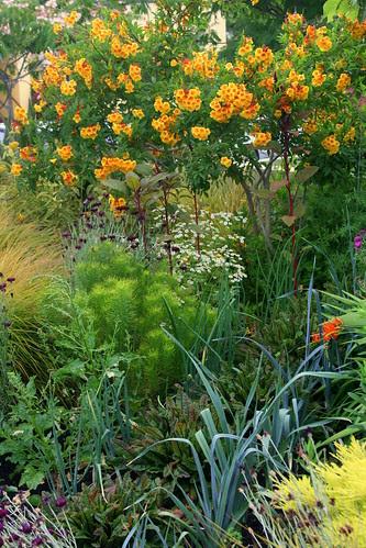 front yard veggie2