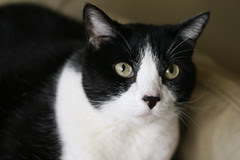 Sami (Diane's Cat)