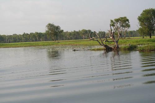 Yellow Waters Cooinda