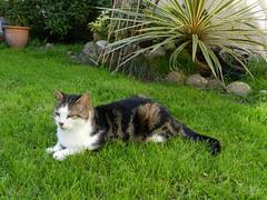 Thatsit in the garden