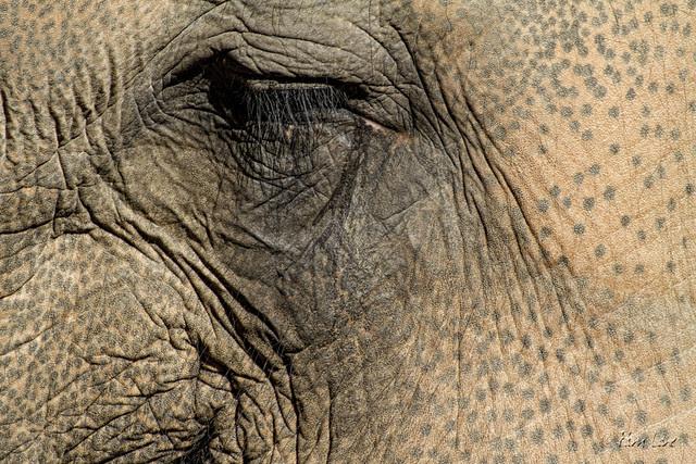 LA Zoo elephant