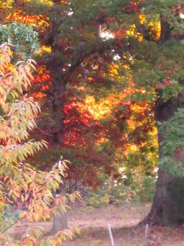 Morning Sun in Autumn Trees