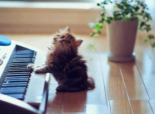 写真:熟練ピアニスト