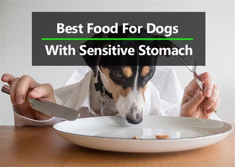 top   dog food  sensitive stomach  diarrhea