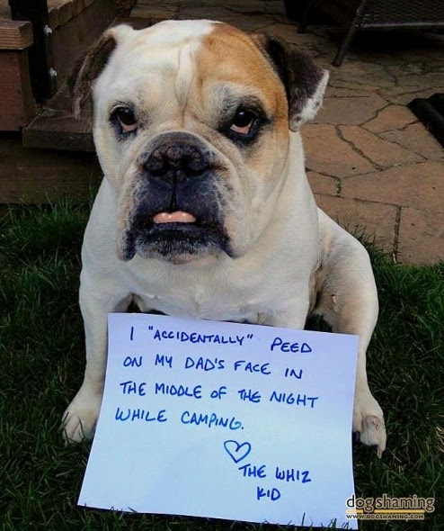 6.17.16 - Dog Shaming - Father's Day Edition9