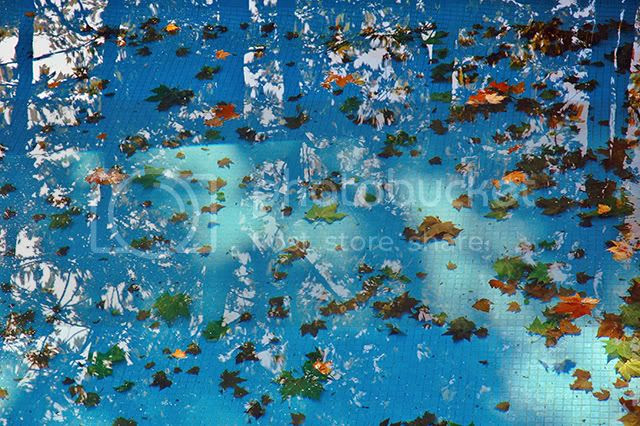 Fallen Leaves on swimming pool [enlarge]
